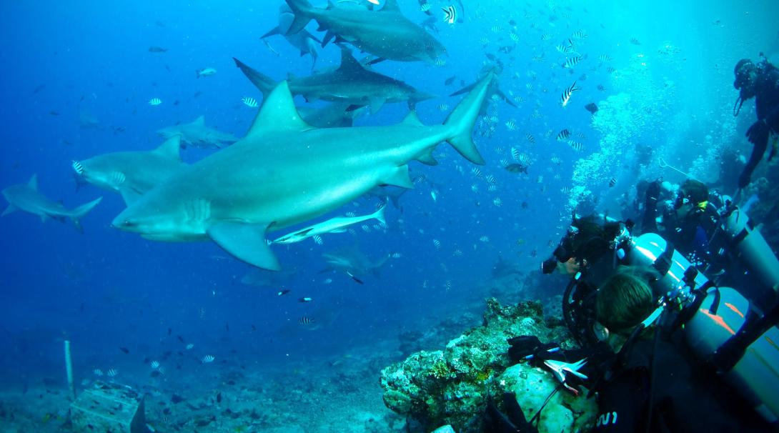 Shark Conservation volunteers and staff help with a survey dive off the coast of Fiji during their shark conservation project overseas
